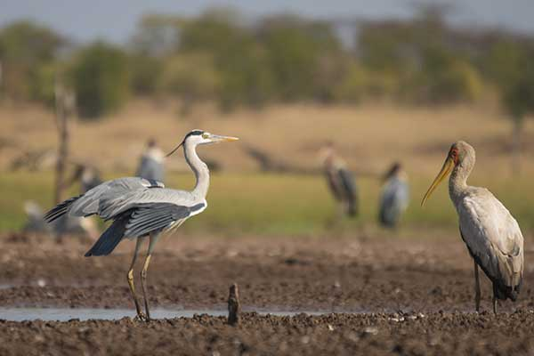 birding-safari