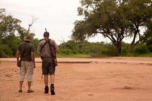 bush-walks