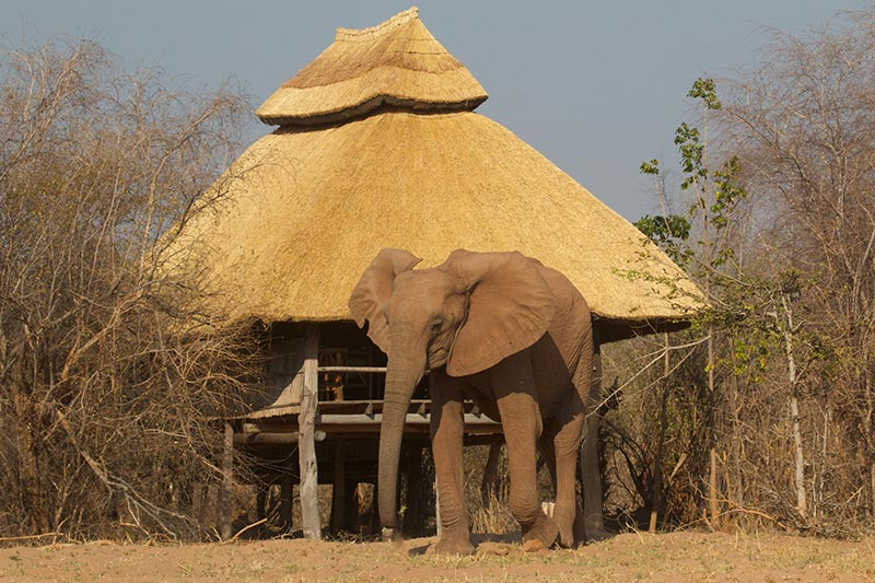 rhino-safari-camp-room-with-elephant-outside