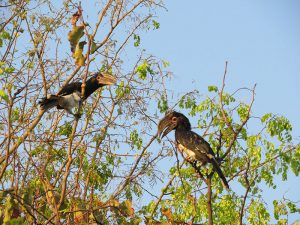 rhino-safari-camp-birding-safari6