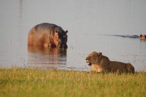 rhino-safari-camp-boat-cruises4