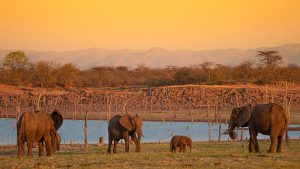 rhino-safari-camp-fishing-safari4