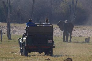 rhino-safari-camp-game-drives5