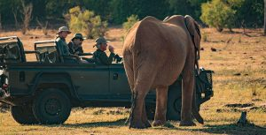 rhino-safari-camp-game-drives8